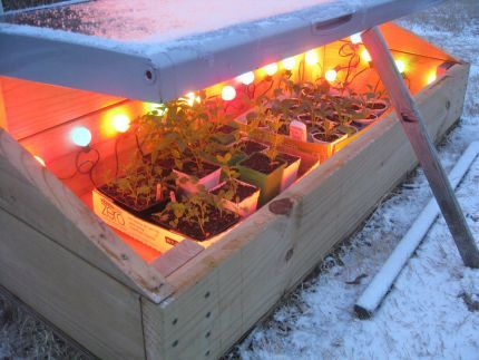 use Christmas lights to boost temp by 20 degrees inside the cold frame