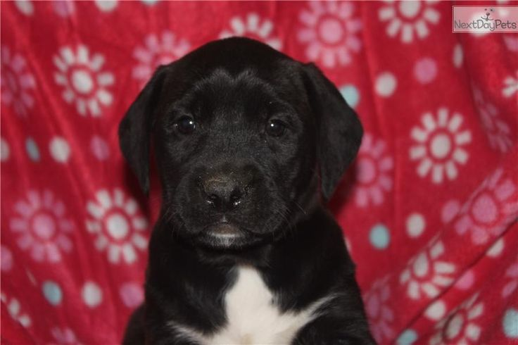 Meet Female a cute Mixed/Other puppy for sale for 100