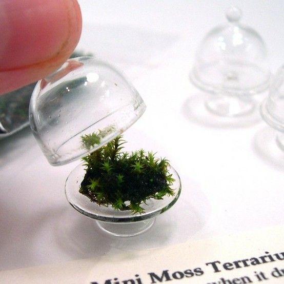 OMG - tiny moss terrariums