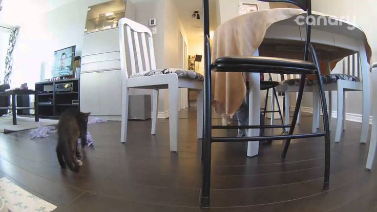 Spy cam caught Cats undressing the table https://www.youtube.com/watch?v=6B1tRdcIq6A