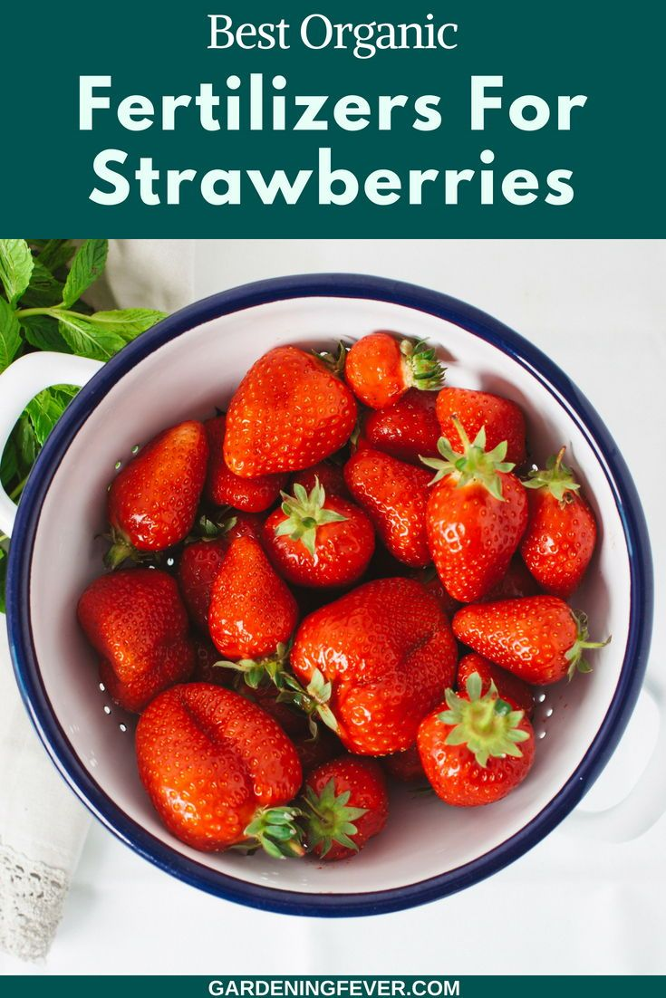 Best Organic Fertilizers For Strawberries Gardening Fever Organic Vegetables Organic Fertilizer Organic Plants