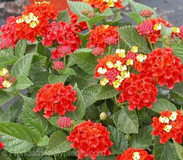 best zone  plants images on, Natural flower