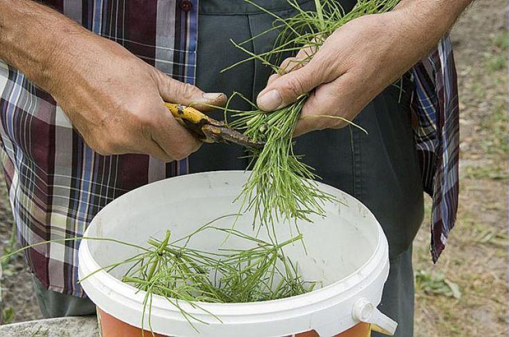 Préparer ses traitements naturels pour un jardin protégé des maladies et parasites sans produit chimique - F. Marre - Rustica - Jardin de Jean-Marc
