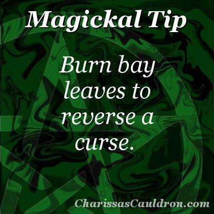Magickal Tip - Bay to Reverse a Curse – Charissa's Cauldron