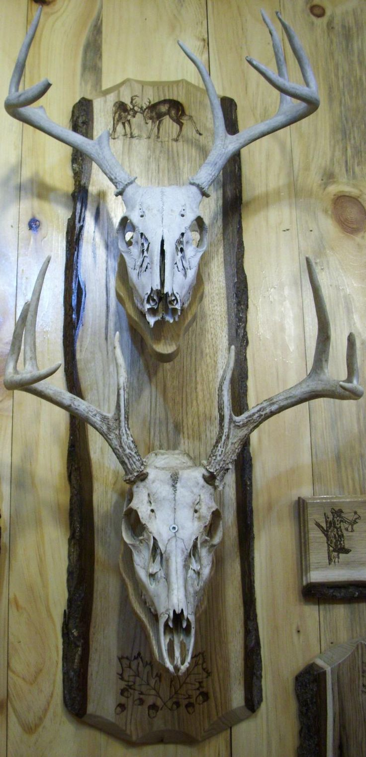 Deer skull mount ideas - A Personalized Laser Engraved Double European Skull Board