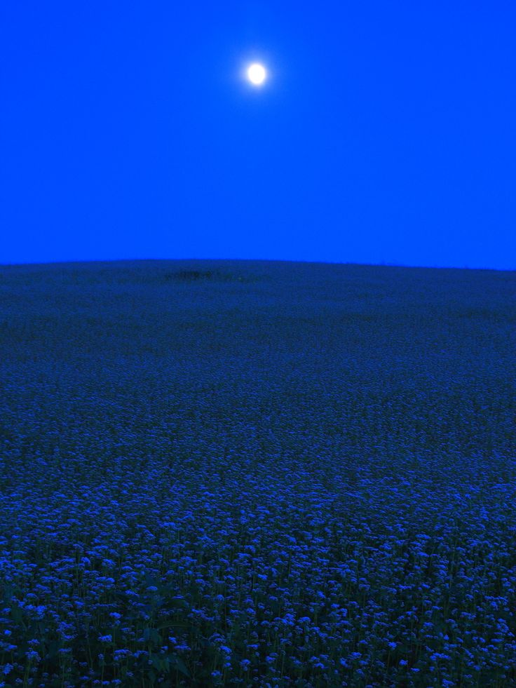 Moon and Buckwheat Field, Japan