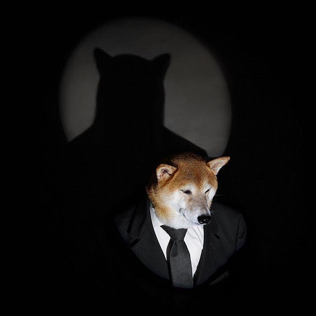 The Real Bruce Wayne Batdog Dccomics Menswear Dog Stylish Dogs Bat Dog