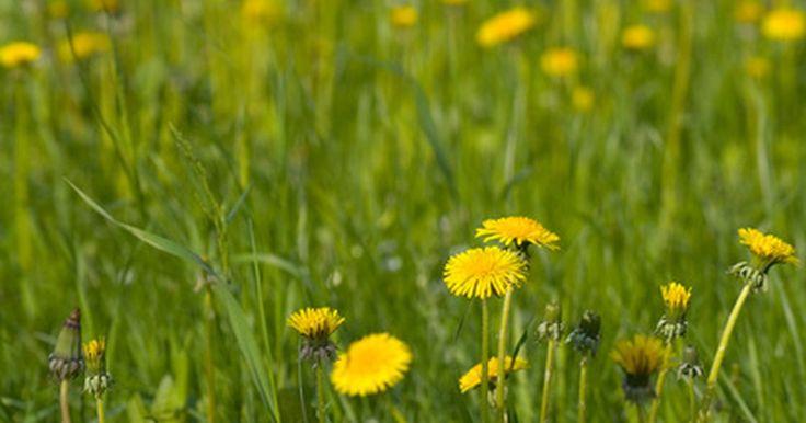 ¿Qué es el herbicida 2,4-D?. Ampliamente usado para controlar las malezas de hoja ancha y algunas plantas herbáceas y leñosas, el 2,4-D (ácido 2,4 diclorofenoxiacético) actúa como un regulador de la hormona del crecimiento de la planta. El herbicida se mezcla con otros herbicidas, sales o formas ácidas para aplicarse mediante la fumigación, difusión o rociado. Puede persistir ...