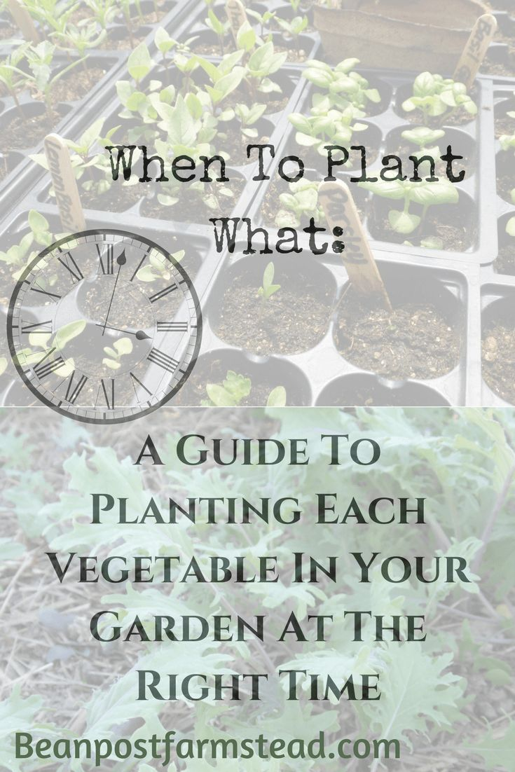 When to plant what takes the guess work out of planting, allowing you to get the most out of your garden this year!