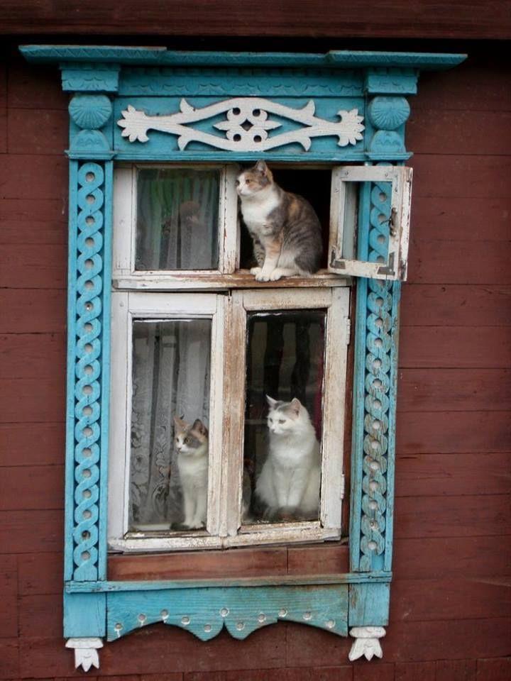 Lovely trio of kitties