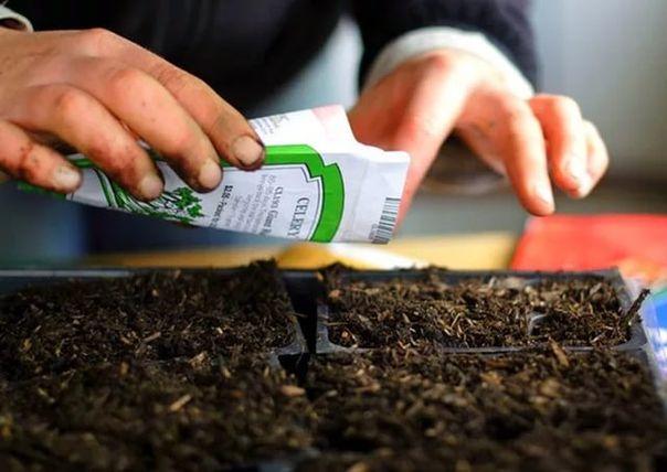Мой ДОМ: Как подготовить и посеять семена цветов на рассаду...