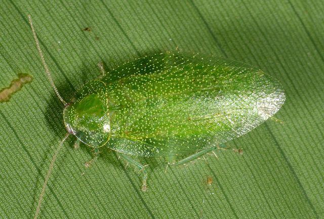 зеленый таракан фото можете найти почти