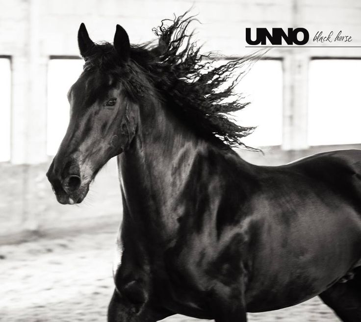 Unno #unno #blackhorse #blackbeauty #black #horses #horse #rinding #horselover #murgese #murgesepassion #animal #nature #cheval