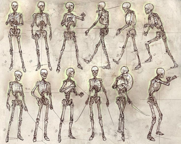 Feng Zhu - human skeleton proportions