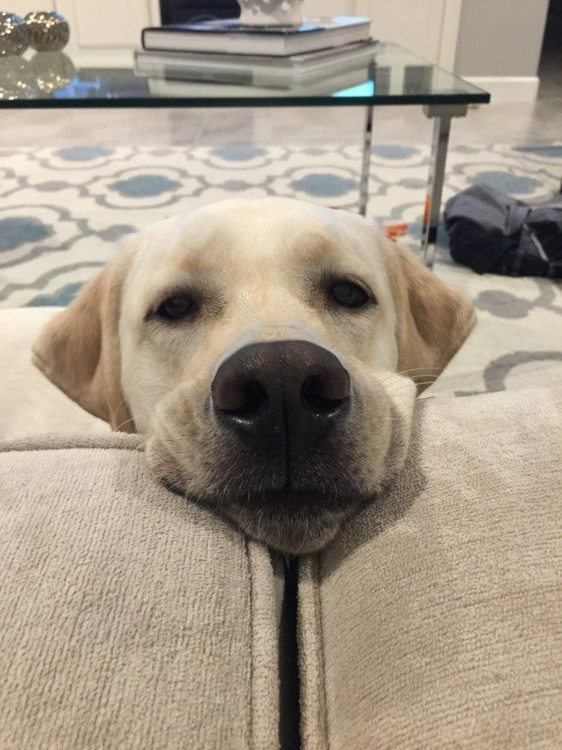 They have a begging face that really NO ONE can resist.:
