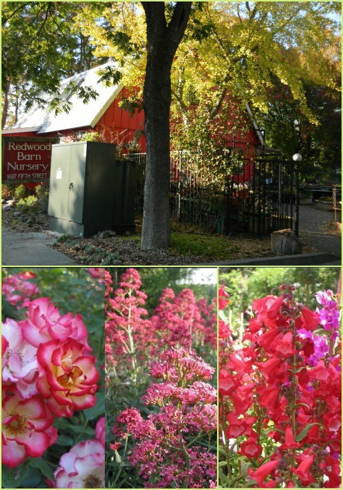 Redwood Barn Nursery - 1607 5th St., Davis, CA  95616; (530) 758-2276 (= 758-BARN)   (530) 758-0912 Fax; Store Hours: Monday - Saturday 9:00 - 5:30; Sundays 12:00 - 5:00