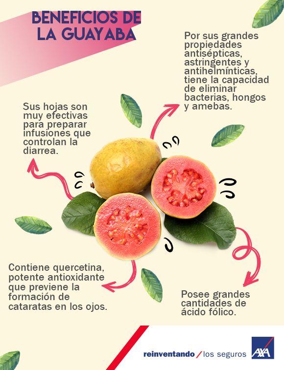 La #guayaba es una fruta de origen americano tropical, pero en 1526  los colonizadores españoles la #exportaron fuera del #continente, llegando a ser un #cultivo importante en la India y China. ¡Conoce los beneficios que te brinda  el consumirla!
