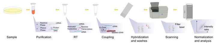 DNA microarray - Wikipedia