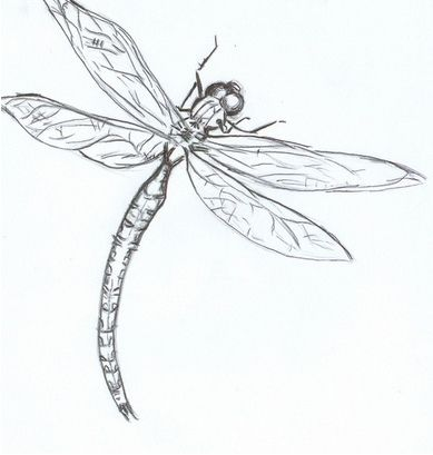 dragonfly by embryo-spark on DeviantArt