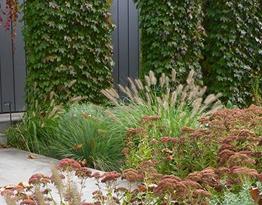 54 best Ornamental Grasses images on Pinterest Ornamental