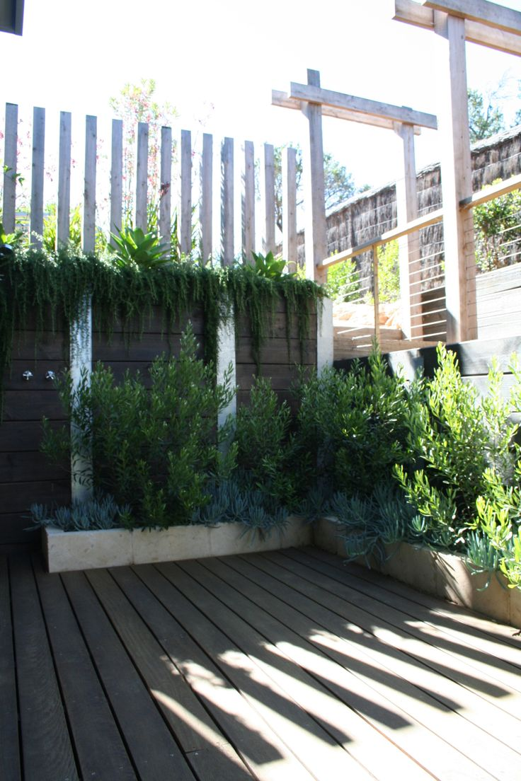Coastal garden courtyard. Vertical timber post screen and drought tolerant plantings of swan neck agave and prostrate rosemary cascading over retaining wall. Raised limestone planters with olive leaf grevillea hedge and blue chalk sticks. Sorrento House. www.marktraversla.com