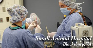 Small Animal Hospital (Blacksburg, VA)