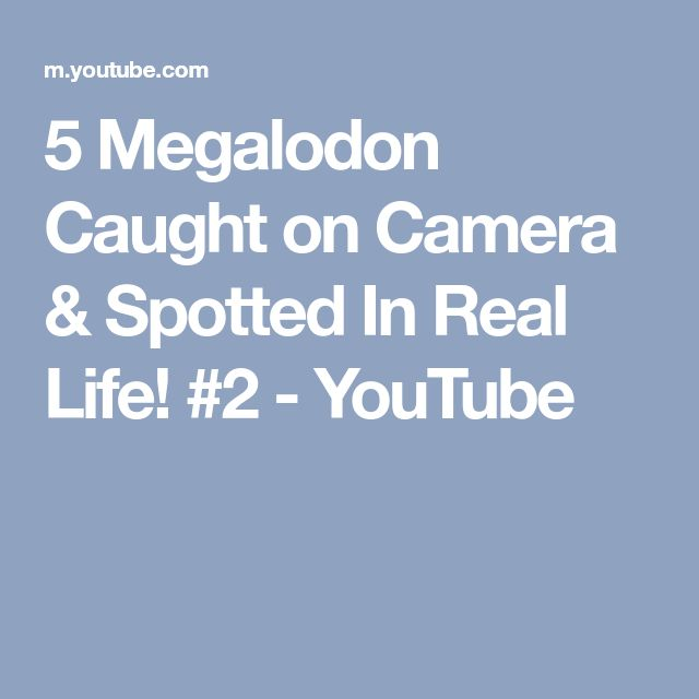 5 Megalodon Caught on Camera & Spotted In Real Life! #2 - YouTube