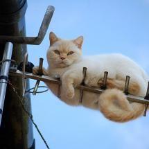 :): Reception, Animal Pics, Funny Kitty, Animal Planets, Beautiful Cat, Cat Treats, Cat Photo, Crazy Cat, White Cat