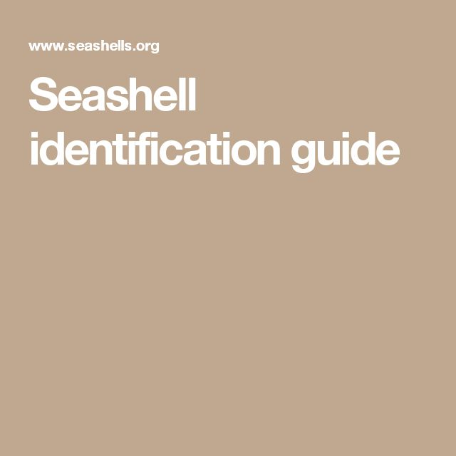Seashell identification guide