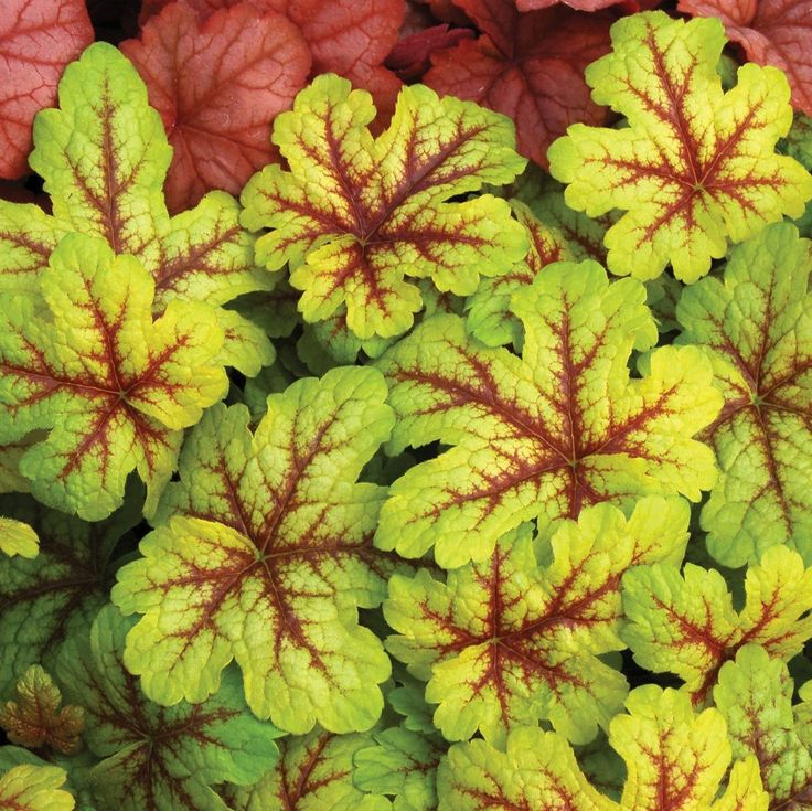 The Best New Shade Perennials for 2014