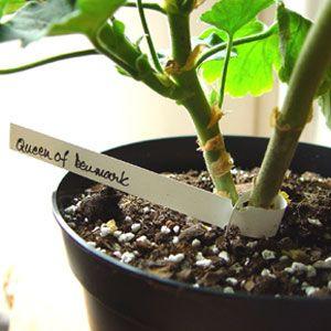 Hängetiketter, 50-pack, Hängetikett med ögla för växte #Plantetikett #Hängetikett