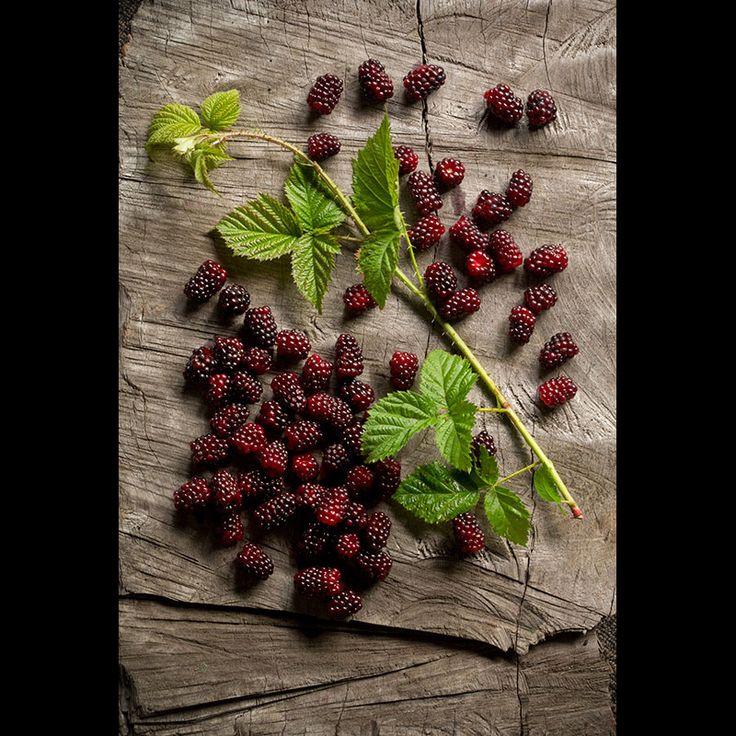 Craig Kinder Food Photography