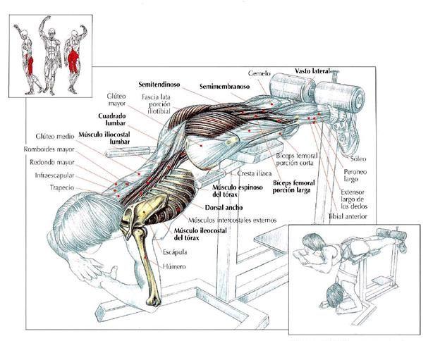 Mejores 63 imágenes de Ejercicios de Stretching en