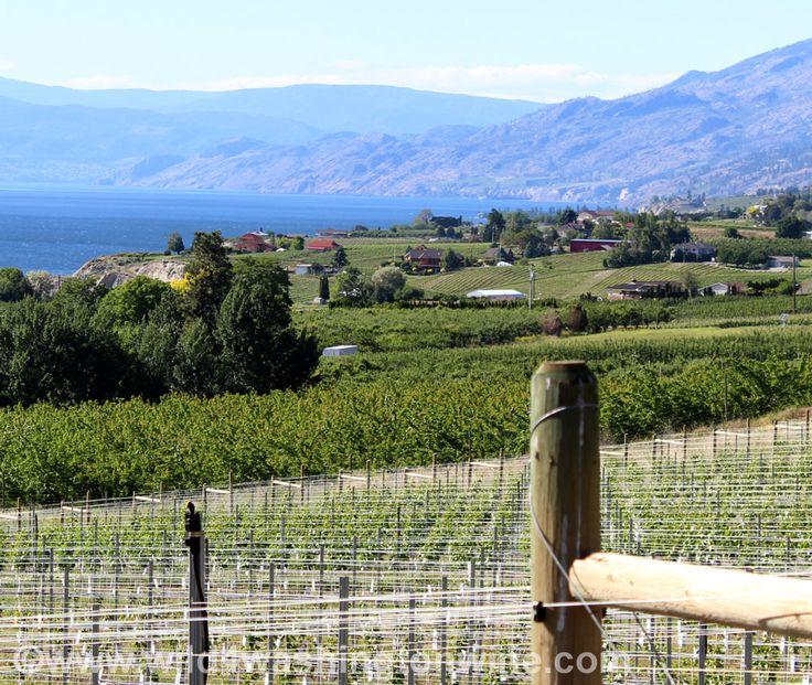 Naramata Bench, Penticton, British Columbia wine country view.