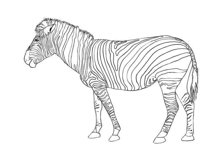 Zebra A Coloring Pages Coloring Pages Zebra Legodibujo Zebra Coloring Pages Horse Coloring Pages Shopkins Colouring Pages