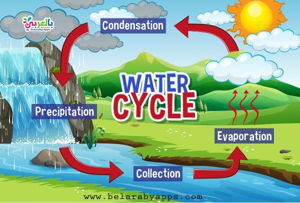 رسومات عن دورة الماء في الطبيعة للاطفال رسم تعليمي بالعربي نتعلم Water Cycle Water Cycle Process Cycle Process