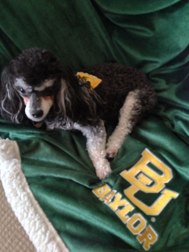 Sic 'Em Bears!: In Bears, Baylor Girl, Baylor Pets, Baylor Bound, Sic In, Baylor Bears