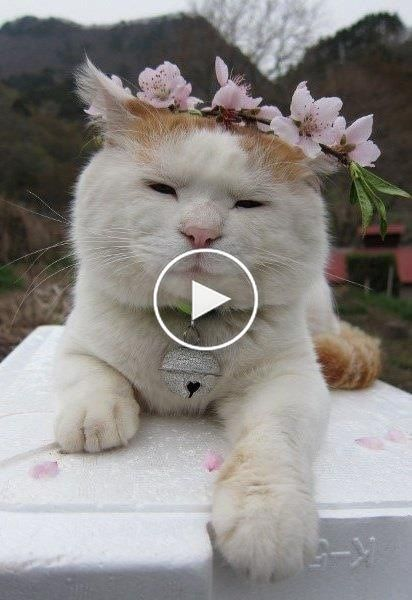 Cutest Cat Ever 2019 Hy Cats Compilation Funnyvines Cute Dog Baby Dogs Funny Videos Kitty Animal