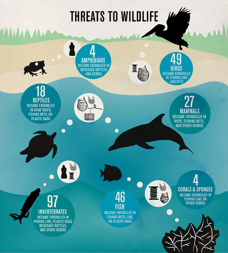 Do you know how trash threatens wildlife? Participate in the 2012 International Coastal Cleanup day by picking up trash you see (you don't have to be at a beach to help!)