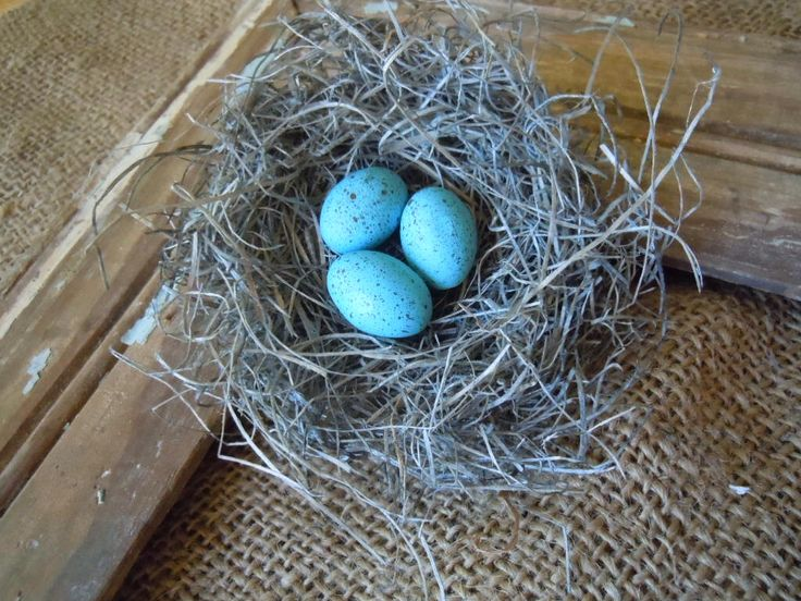 Shabby Chic Handmade Bird Nest with Turquoise Robin's Eggs by AMarigoldLife on Etsy https://www.etsy.com/listing/102921362/shabby-chic-handmade-bird-nest-with