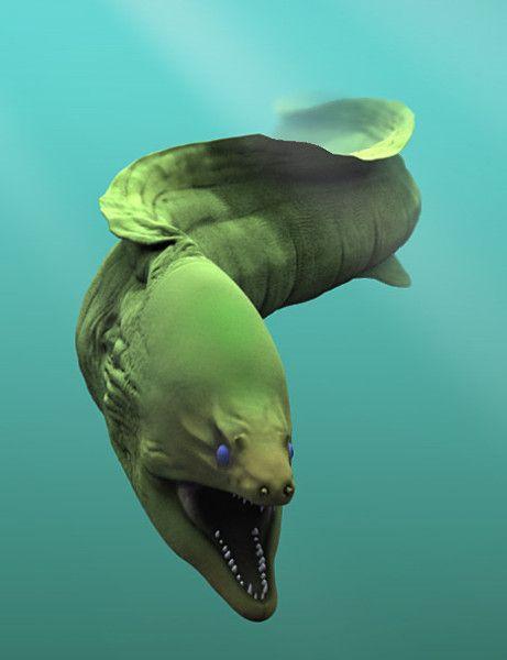Moray eel so cool