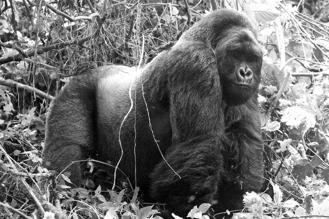 Safarious - Kate Lorentz - Apes and Primates