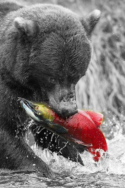 68 best color splash animals animal photography images on. Black Bedroom Furniture Sets. Home Design Ideas