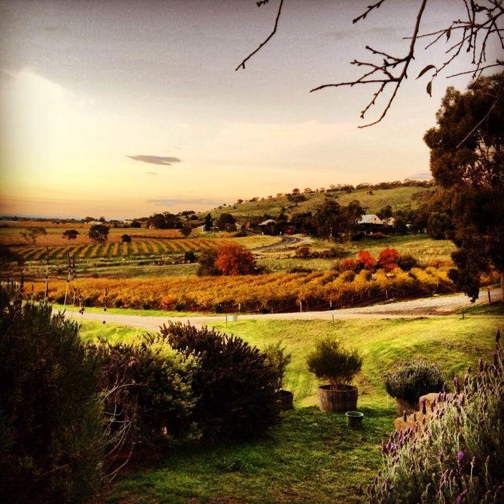 Autumn colours at Bethany