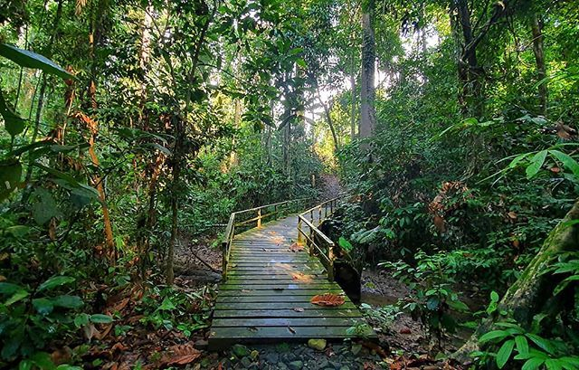 Beautiful Nature Trail At The Sepilok Kabali Forest Reserve In Sabah Photo Is Taken On Ultra Wide Mod Beautiful Nature Amazing Photography School Photographer