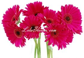 Love the colour hot pink (was one of my wedding colours) and also one of my favourite flowers is the gerbera :)