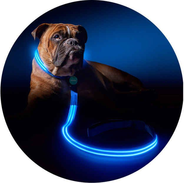 PoochLight leashes and collars are ideal for people that live in areas without sidewalks What a brilliant idea http://fleaandtickfordogs.net