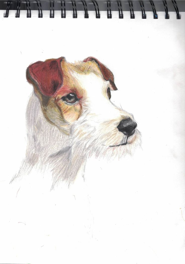 A little Jack Russel terrier i drew today when i had nothing to do... ^_^