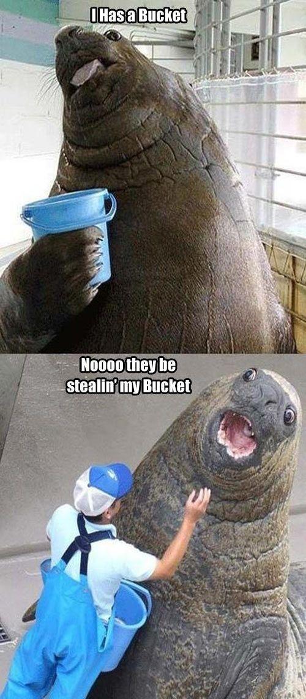 Bucket Meme #Happy, #Proud
