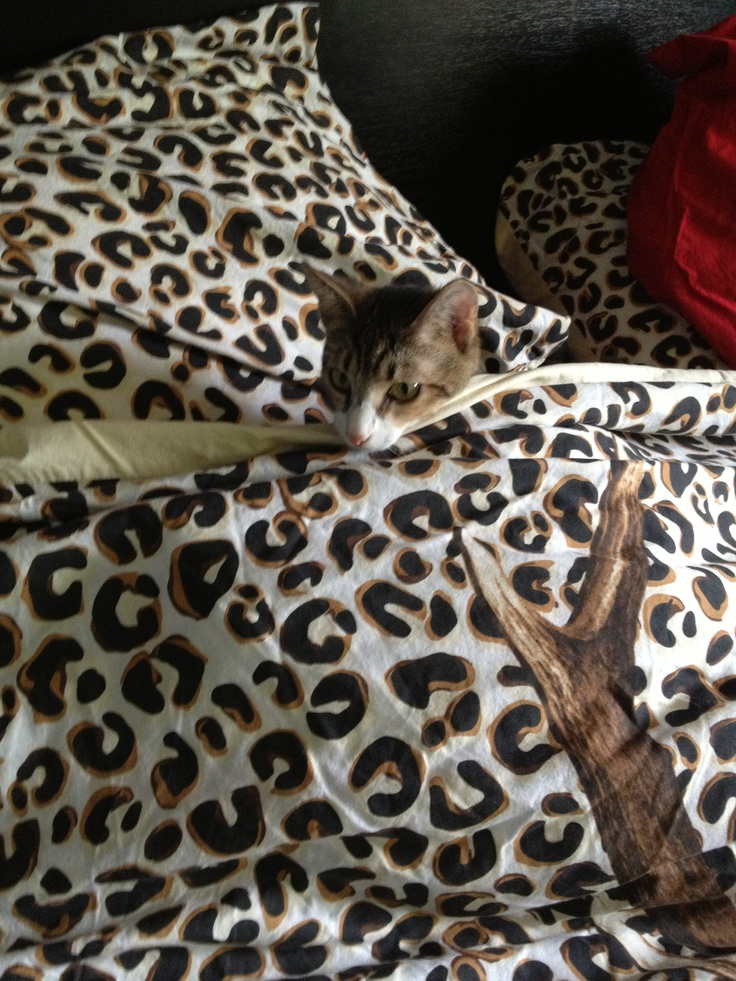 Muffin hiding in our bed :)